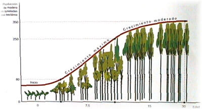Manual de selvicultura del eucalipto for Cuanto mide un arbol